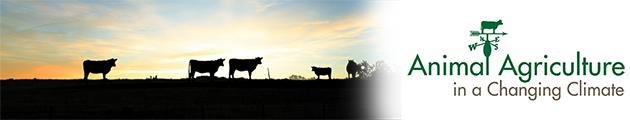 cattle at sunrise picture combined with aacc weathervane logo